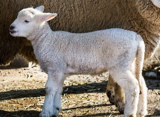 吉田羊 整形
