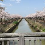 桜ネックレス 稲沢市 見ごろ 駐車場